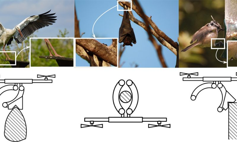 Tiny claws let drones perch like birds and bats